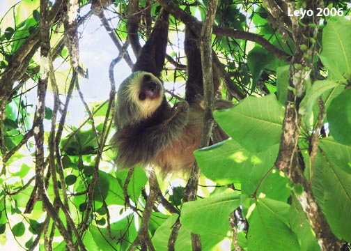 10 Facts About Sloths