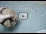 Southern three-banded armadillo walking (YouTube)