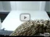 Southern three-banded armadillo eating (YouTube)