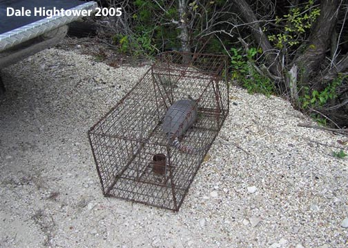 how to keep armadillos from digging in your yard