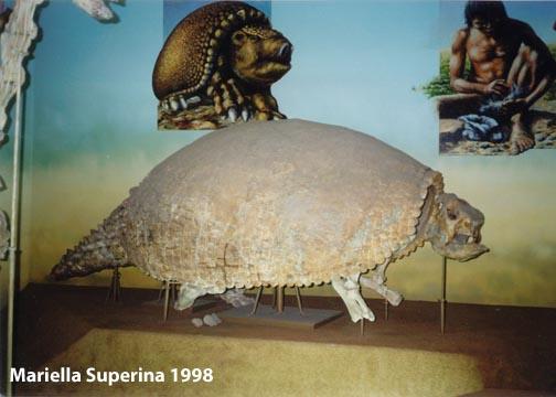Natural History Of The Armadillo